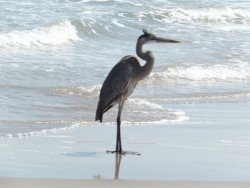 Birds and More on Mustang Island